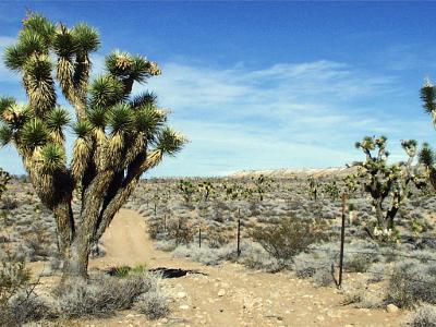 succulent plants of the mesquite nevada desert